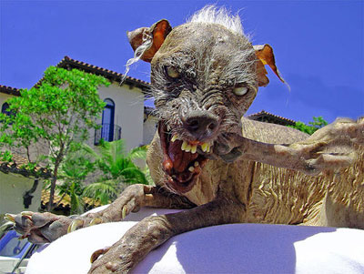Could this creature be the next American Idol?  It can't be any worse than some of these bozos.
